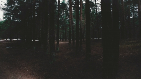 A dark, lonely forest where the lost wander - dark, sad, mysterious, lonely, trees, woodland, forest, shadow, tree, shadows, path