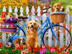 Peddle Pups