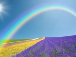 Rainbow Across a Lavender Field