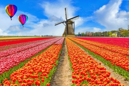 Balloons over tulips field - balloons, dutch, spring, field, Netherland, colorful, windmill, beautiful, sky, Holand, flowers, tulips