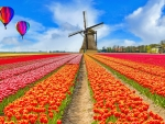 Balloons over tulips field