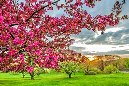Spring Blossoms - color, clouds, sky, trees, landscape