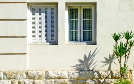 Windows - windows, shutters, wall, plant, shadow