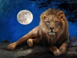 Lion by Moonlight