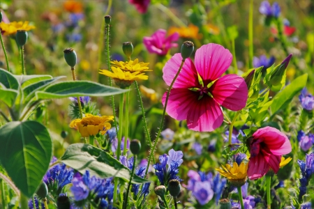 Flowers close up - pretty, close up, grass, wildflowers, flowers, spring, beautiful, freshness, summer