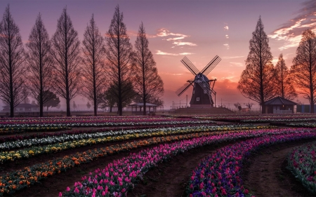 Spring in Holland, Netherlands - trees, Holland, Netherlands, windmill, spring, tulips