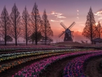 Spring in Holland, Netherlands