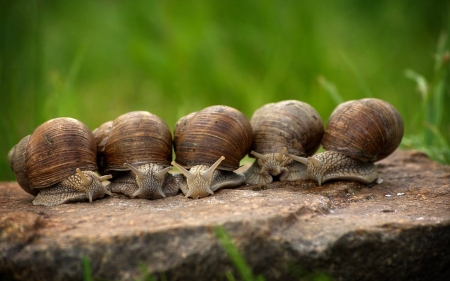 Snail Party - group, rock, snails, animals