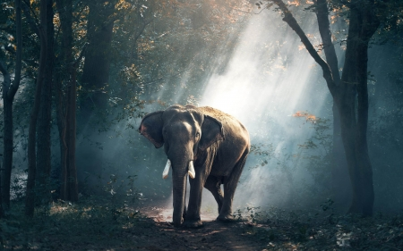 Elephant in Thailand - forest, sunbeams, Thailand, elephant