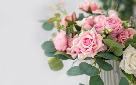 Roses - flower, pink, rose, green, card