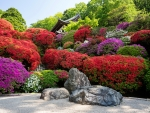 Rhododendrons garden