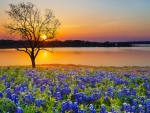 Spring sunset over lake in Texas