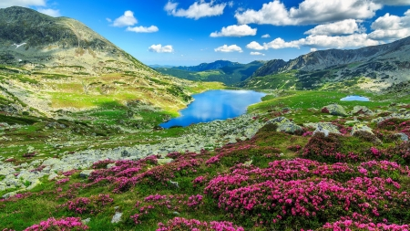 Landscape with mountain and lake - mountain, view, wildflowers, spring, beautiful, sky, lake, meadow