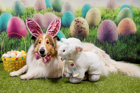 Happy Easter! - card, dog, ears, caine, toy, easter, egg, sheep, cute, bunny, colly, pink
