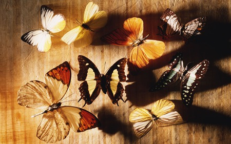 BUTTERFLY COLLECTION - butterflies, multiple, collection