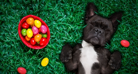 :) - egg, red, green, caine, black, easter, card, dog, paw
