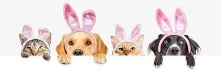 Happy Easter! - paw, caine, ears, easter, cat, card, animal, cute, pet, bunny, eyes, pink, pisici, kitten, dog, puppy