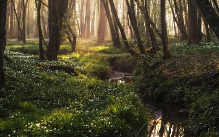 Spring Forest Forests Amp Nature Background Wallpapers On