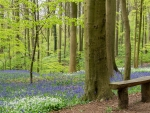 Bench in Spring Forest