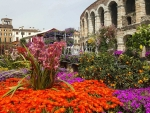 Flower Market in Front of Arena of Verona
