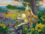 Wolves in Spring