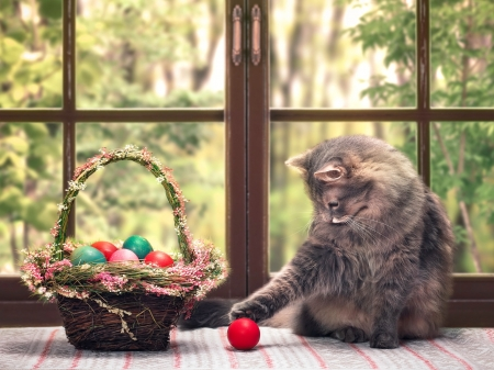 Easter cat - easter, adorable, cat, sweet, playing, colorful, window, fluffy, kitty, cute, basket, eggs