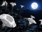 Moon Kissed Flowers