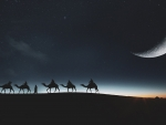 Moonlight Camel Caravan