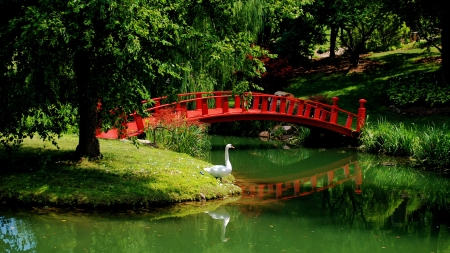 Schnormeier gardens - river, swan, refelction, forest, japanese, greenery, park, trees, lake, pond, tranquil, bridge, serenity, garden