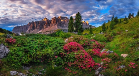 Rhododendron flowers - rocks, mountain, Val Gardena, rhododendron, wildflowers, flowers, dolomites, beautiful, view