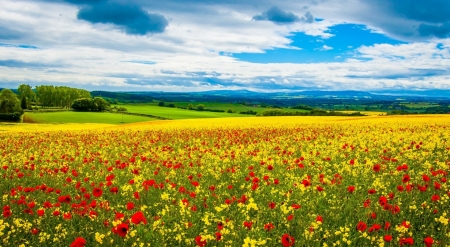 Spring poppy field - poppy, flowers, spring, seasons, landscape, scene, meadow, field, wallpaper