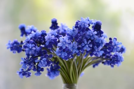 Blue flowers - stocks, blue, cut, photography, HD, flowers, nature