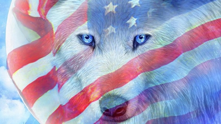 Wolf Patriot - patiotic, wolf, United States of America, wolves, loup, flag, red whie and blue, USA, pirit, spirit