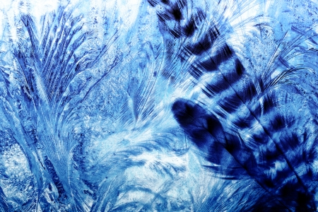 Feathered - Abstract, Arty, Feathers, Blue