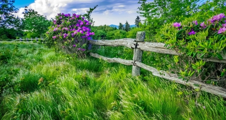 Mountain rhododendrons - fence, mountain, grass, rhododendron, greenery, wildflowers, beautiful, freshness