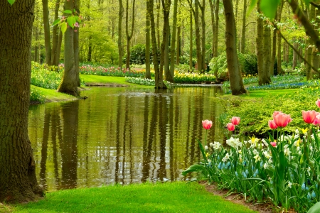 Green paradise - Keukenhof, spring, park, trees, pond, serenity, paradise, peaceful, garden, walk, tulips, reflection, tranquility, pretty, grass, beautiful, Netherland, Holland, flowers, greenery