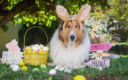 :) - ears, caine, collie, bunny, easter, dog, card, egg, cute, basket