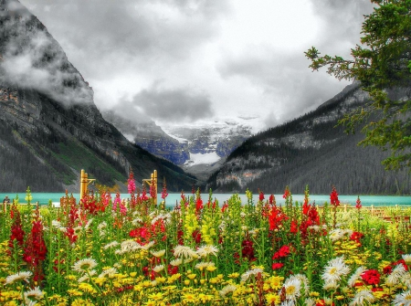 Flowers at Lake Louise - mountains, alberta, banff, blossoms, colors, clouds, canada