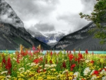 Flowers at Lake Louise