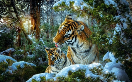 Tigers - forest, cub, snow, mother, trees