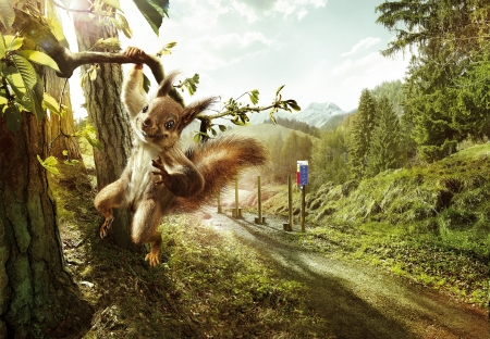 :D - fantasy, veverita, add, squirrel, commercial, funny, vitaparcours, animal