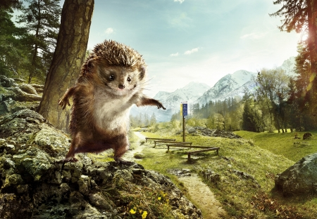 :D - add, fantasy, hedgehog, arici, commercial, funny, vitaparcours, animal