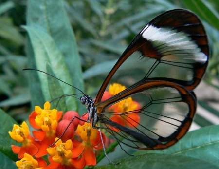 Butterfly - flower, nature, butterfly, insects