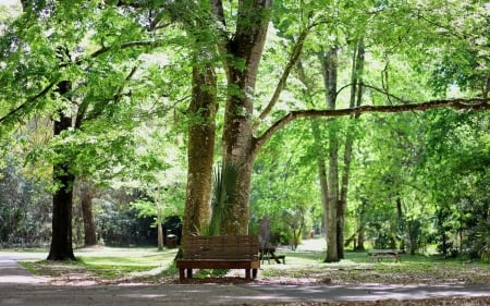 Benches in Park - park, green, trees, benches