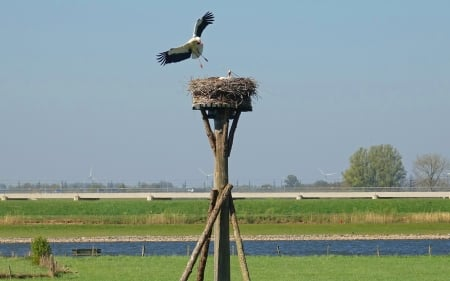 Storks in Nest - wings, nest, storks, birds, road, wind turbines