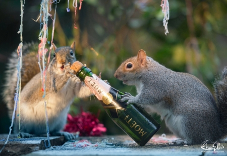 :D - bottle, max ellis, squirrel, veverita, new year, funny, animal