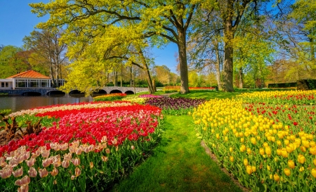 Keukenhof park - Holland, Keukenhof, garden, park, tulips, beautiful, Netherland, colorful, grass, flowers
