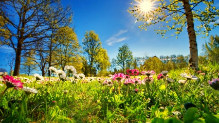 Spring freshness - wildflowers, beautiful, spring, sky, meadow, sun, grass, park, trees, freshness, rays