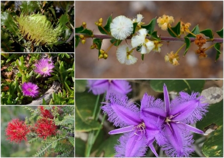 FLOWER COLLAGE - NATURE, COLLAGE, FLOWER, IMAGE