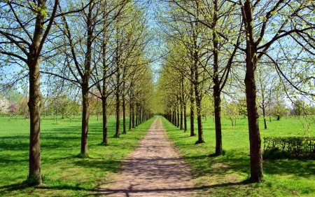 Spring Alley - trees, alley, avenue, path, spring, road